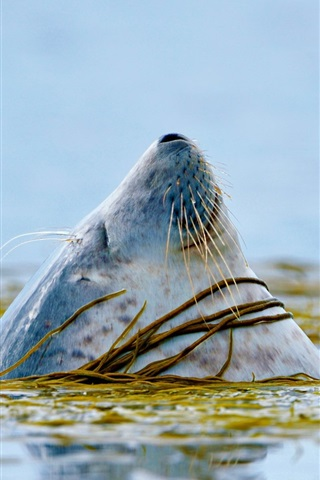 iPhone Wallpaper Seals head out of the water
