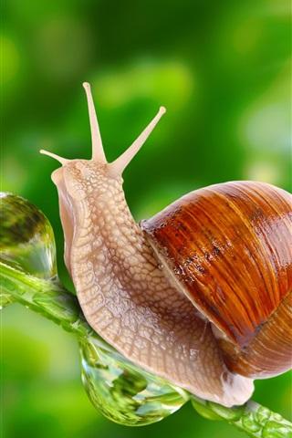 iPhone Wallpaper Snail under sunshine