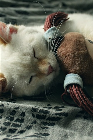 iPhone Wallpaper The cat is sleeping with a rag doll