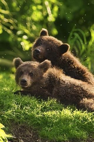 iPhone Wallpaper Two bear cubs playful in grass