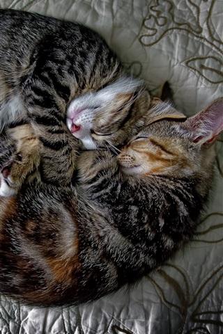 iPhone Wallpaper Two cats falling asleep