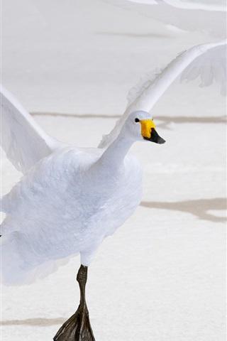 iPhone Wallpaper White swan flight