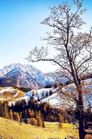 iPhone Wallpaper Winter or autumn, trees, mountains, snow, blue sky