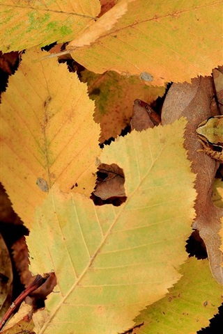 iPhone Wallpaper Yellow leaves, autumn, frog
