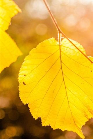 iPhone Wallpaper Yellow leaves close-up, bokeh, autumn