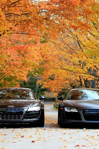 Audi R8 V10 Cars Front View Autumn Trees 640x1136 Iphone 5 5s 5c
