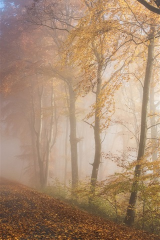 iPhone Wallpaper Autumn, forest, trees, fog, road, morning
