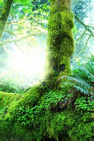 iPhone Wallpaper Beautiful natural forest, trees, shrubs, moss, grass, green