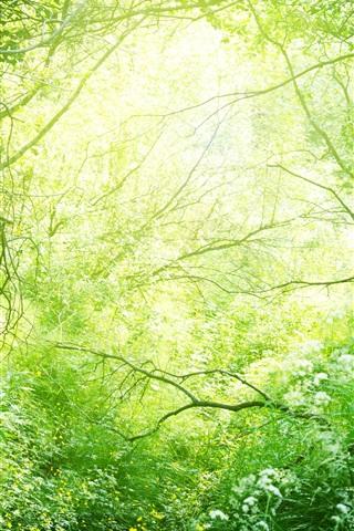 iPhone Wallpaper Beautiful nature, grass, trees, bushes, green, sunshine