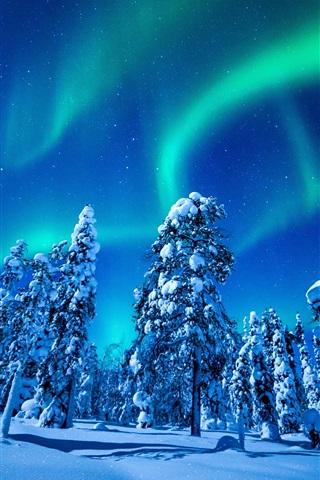壁纸 美丽的北极光,冬天,雪,云杉,树木,夜 2880x1800 HD 高清壁纸, 图片, 照片