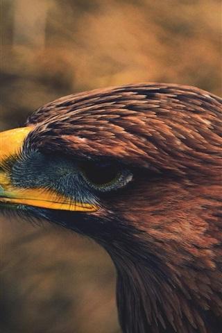 iPhone Wallpaper Birds, eagle head close-up, hook beak