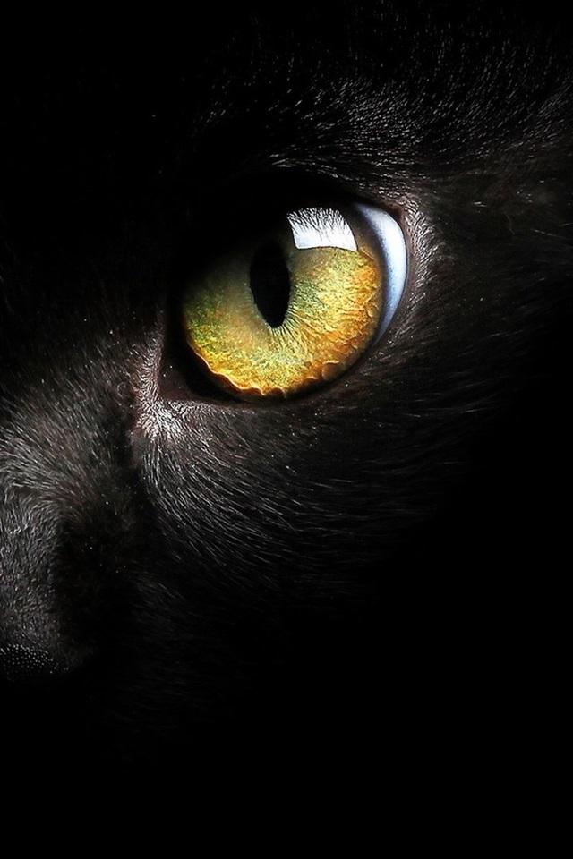 Fonds d'écran Noir, chat, figure, jaune, oeil 1920x1200 HD ...