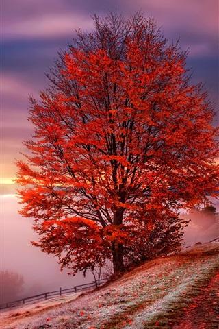 iPhone Wallpaper Carpathians, Ukraine, dawn, fog, mountains, trees, red leaves, autumn
