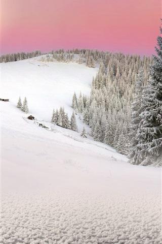 iPhone Wallpaper Carpathians, Ukraine, spruce, trees, winter, snow, sunset