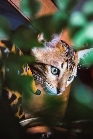 iPhone Wallpaper Cat hidden in the leaves