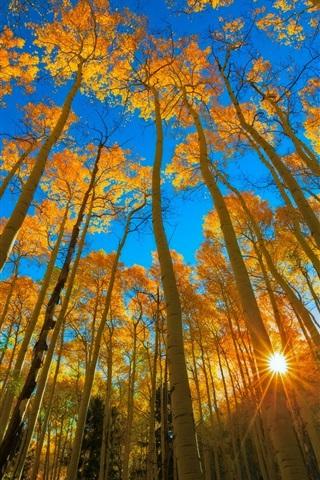 iPhone Wallpaper Colorado, autumn, aspen, forest, trees, sun rays, USA