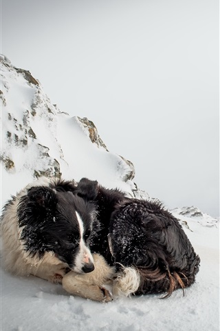 iPhone Wallpaper Dog rest in winter snow