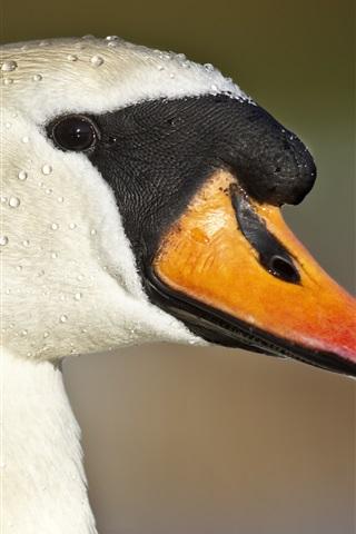 iPhone Wallpaper Duck head close-up, beak, eyes, water drops