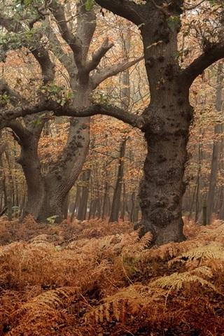 iPhone Wallpaper Forest, trees, fog, autumn, dawn