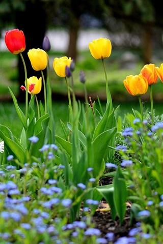 iPhone Wallpaper Garden flowers, spring, tulips, yellow red purple