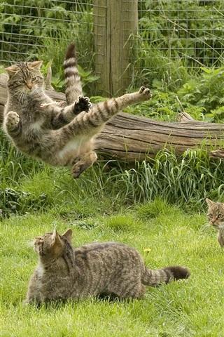 iPhone Wallpaper Gray cats in garden, grass, fence