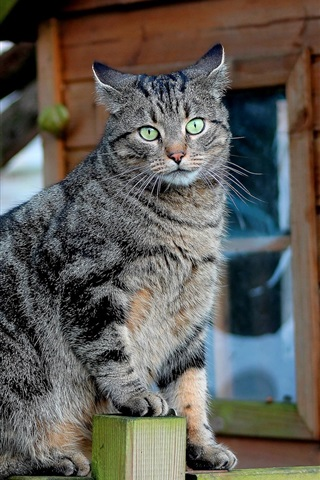 iPhone Wallpaper Green eyes gray kitten standing on the fence