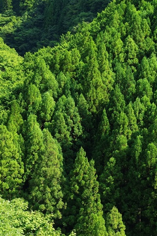 iPhone Wallpaper Green forest, trees, top view
