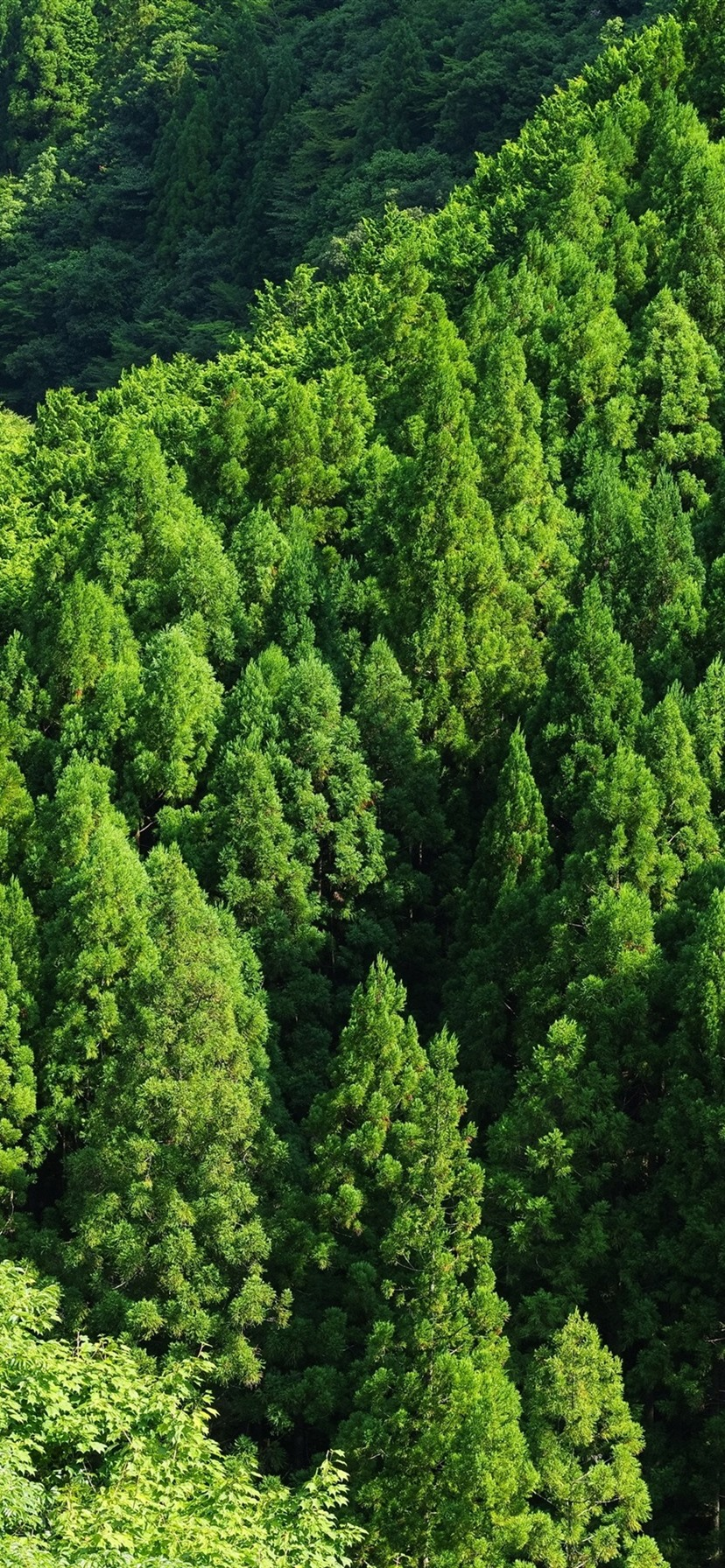 Wallpaper Green Forest Trees Top View 3840x2160 Uhd 4k Picture Image