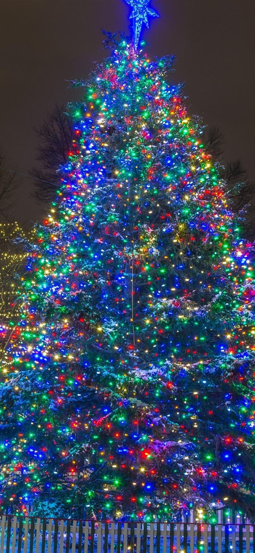 New Year, Christmas tree, lights, night, winter, snow, city
