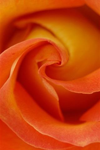 iPhone Wallpaper Orange petals, rose macro photography
