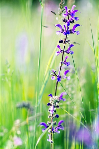 iPhone Wallpaper Purple snapdragons, grass, summer