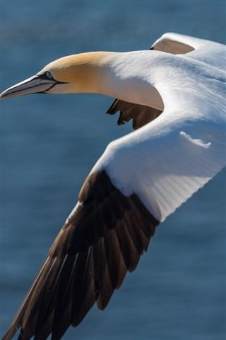 iPhone Wallpaper Seagull flight, wings, water, bird photography