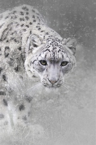 iPhone Wallpaper Snow leopard in winter, snow, fog