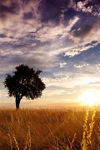 iPhone Wallpaper Sunset farm field, grass, clouds, sun rays