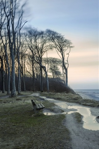 iPhone Wallpaper Trees, shore, coast, sea, dusk