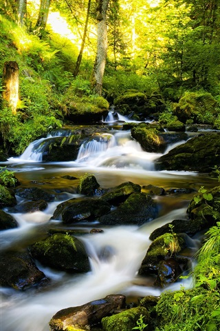iPhone Wallpaper Water stream in the forest, creek, stones, trees, sun rays
