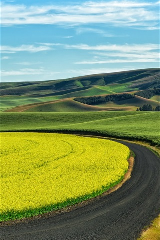 iPhone Wallpaper Wheat and rape field, country road, countryside, Palouse, USA