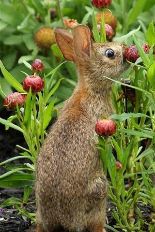 iPhone Wallpaper Wild rabbit, flowers