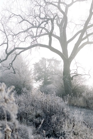 iPhone Wallpaper Winter, frost, trees, grass, path, morning