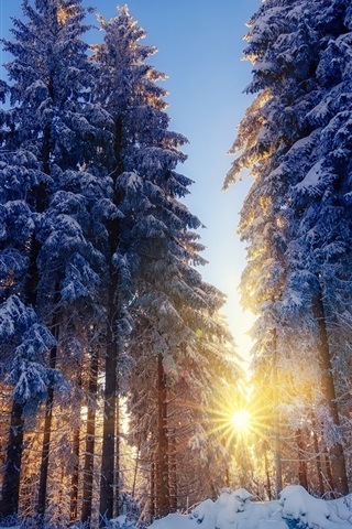 iPhone Wallpaper Winter, snow, forest, trees, sun rays