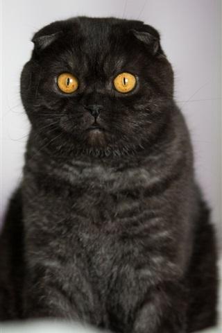 iPhone Wallpaper Yellow eyes black kitten at bed