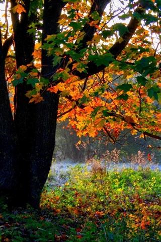 iPhone Wallpaper Autumn, trees, forest, foliage, grass, sunshine