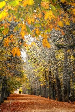 iPhone Wallpaper Autumn, trees, path, park, bench