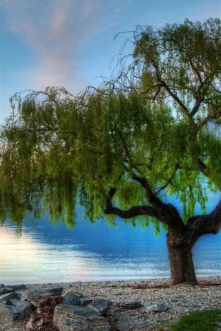 iPhone Wallpaper Beautiful nature, lake, trees, morning, dawn
