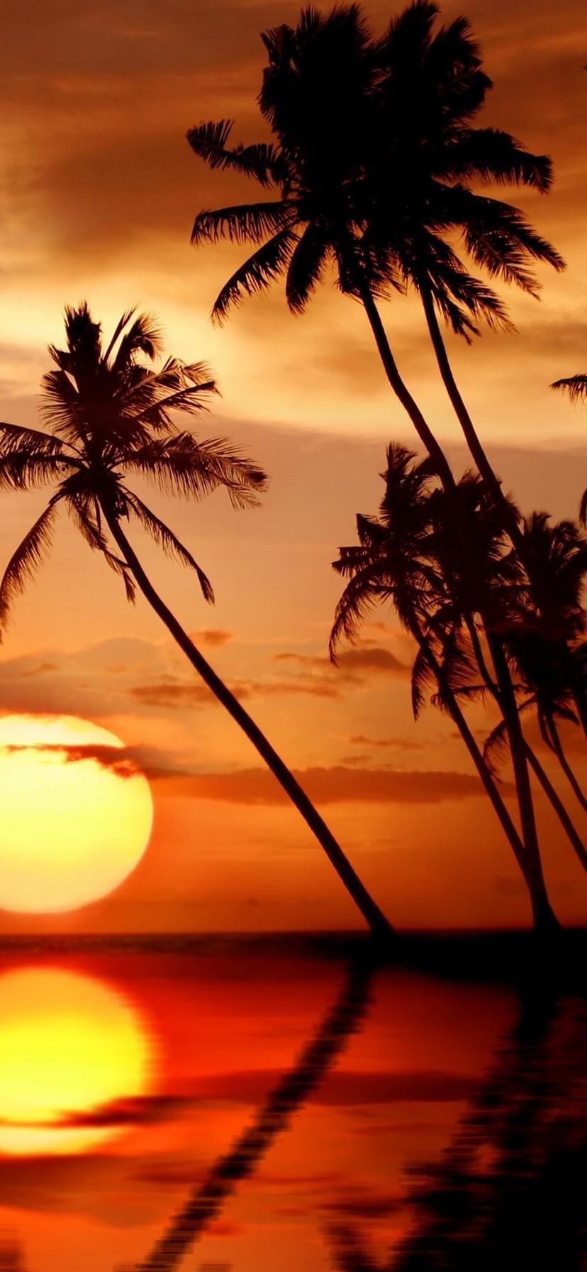 Wallpaper Beautiful Tropical Sunset Palm Trees Sea Beach