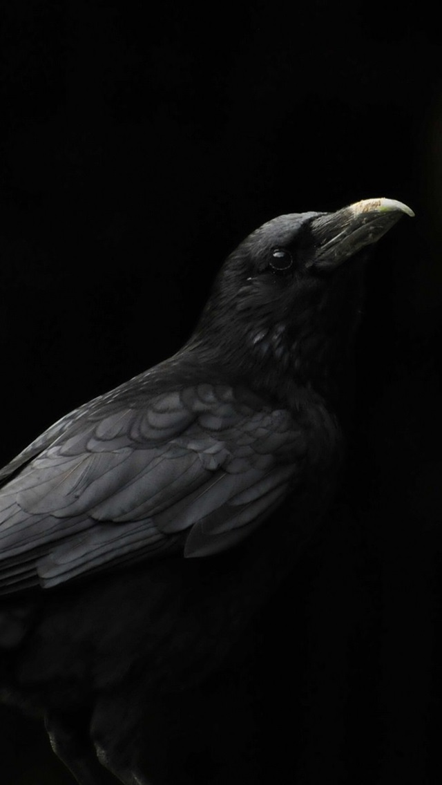 Black Bird Raven Black Background 640x1136 Iphone 5 5s 5c Se