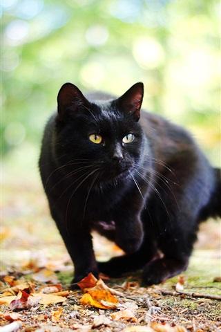 iPhone Wallpaper Black cat in autumn, leaves, bokeh