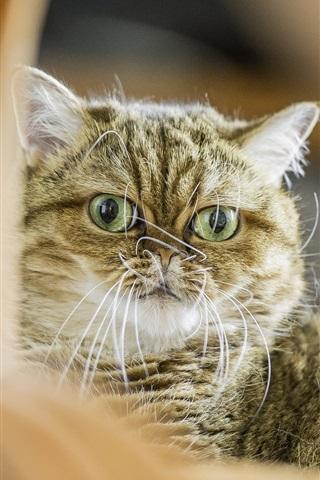 iPhone Wallpaper Cat rest, bokeh