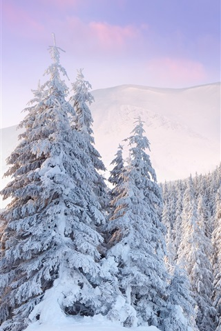 iPhone Wallpaper Cold winter, forest, mountains, thick white snow, dawn