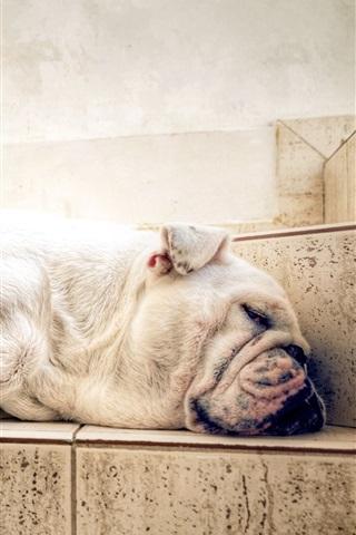 iPhone Wallpaper Dog sleeping, room